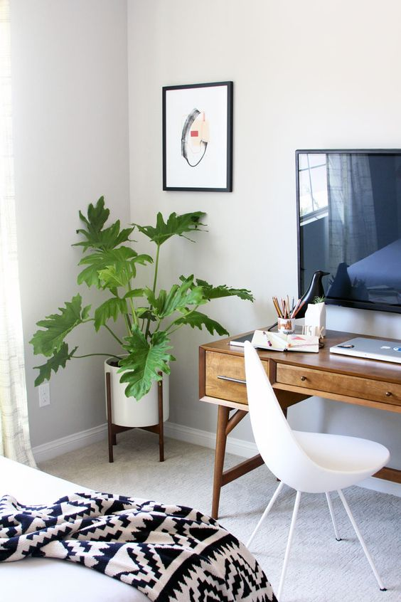 Philodendron Xanadu slaapkamer